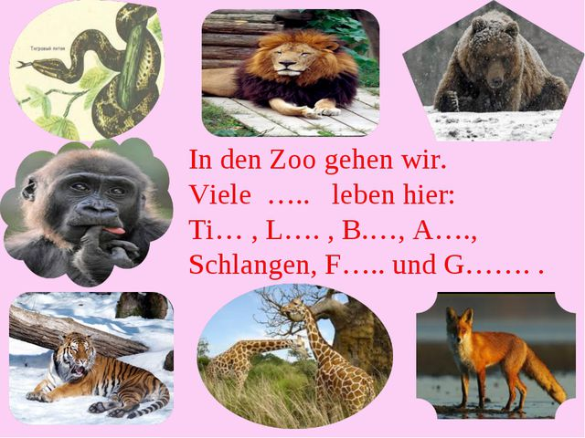 In den Zoo gehen wir. Viele ….. leben hier: Ti… , L…. , B.…, A…., Schlangen,...
