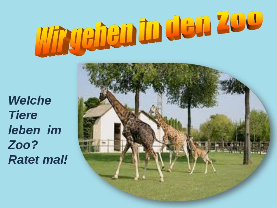 Welche Tiere leben im Zoo? Ratet mal!