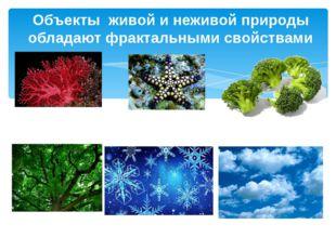 Объекты живой и неживой природы обладают фрактальными свойствами