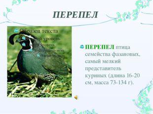 ПЕРЕПЕЛ ПЕРЕПЕЛ птица семейства фазановых, самый мелкий представитель куриных