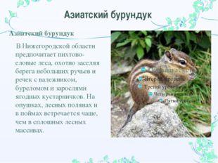 Азиатский бурундук Азиатский бурундук В Нижегородской области предпочитает пи