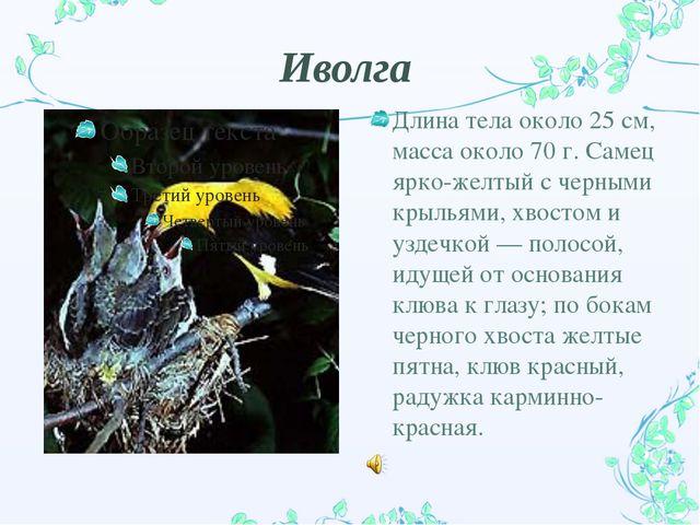 Иволга Длина тела около 25 см, масса около 70 г. Самец ярко-желтый с черными...
