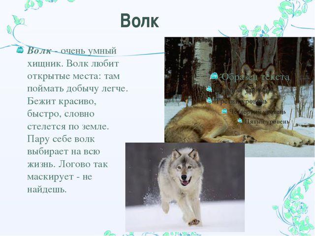 Волк Волк - очень умный хищник. Волк любит открытые места: там поймать добычу...