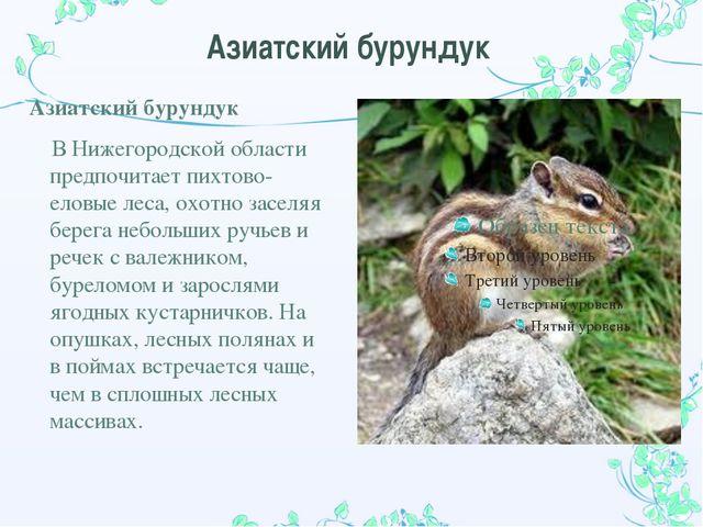 Азиатский бурундук Азиатский бурундук В Нижегородской области предпочитает пи...
