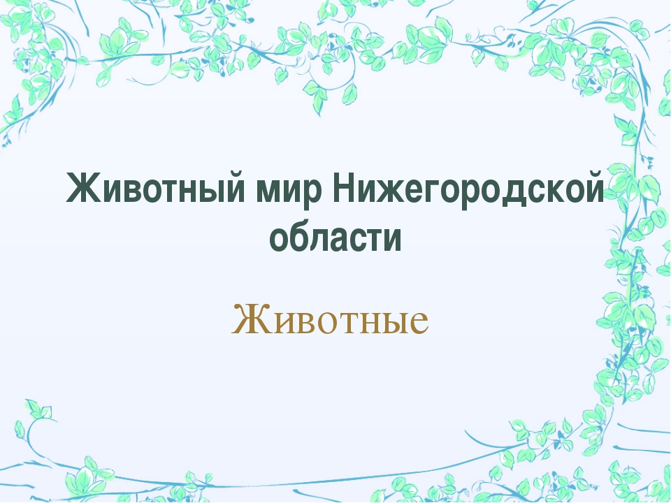 Животный мир Нижегородской области Животные