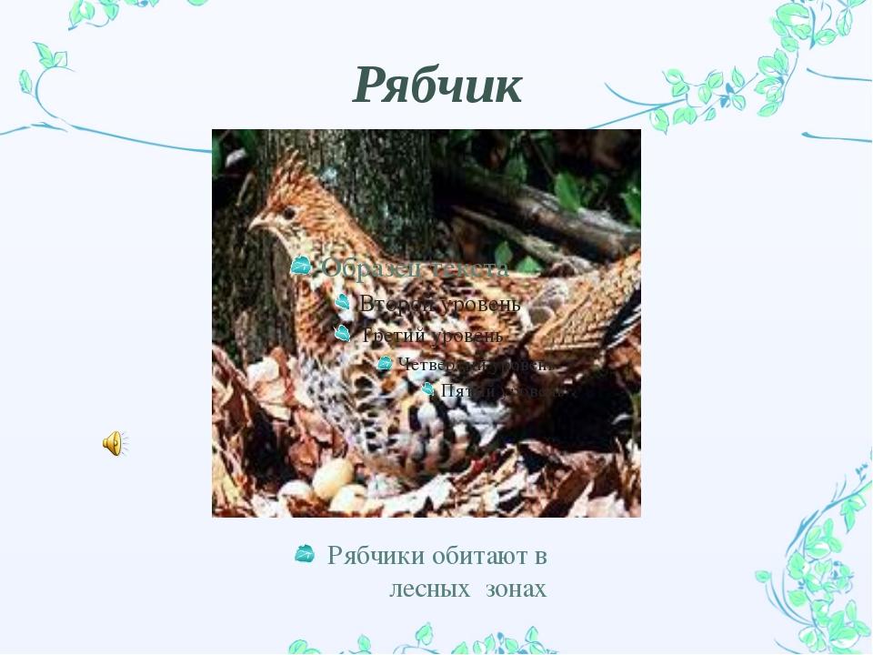 Рябчик Рябчики обитают в лесных зонах