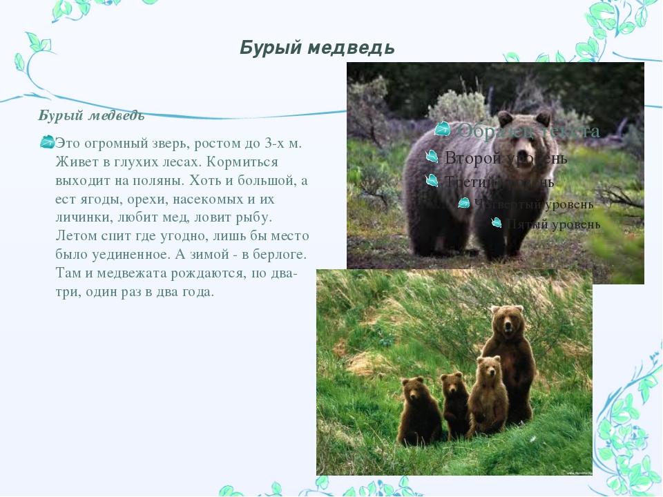 Бурый медведь Бурый медведь Это огромный зверь, ростом до 3-х м. Живет в глух...