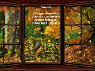 Загадка «Лесная зверюшка, Быстрая хлопотушка, Орешки запасает – Зимой горя не