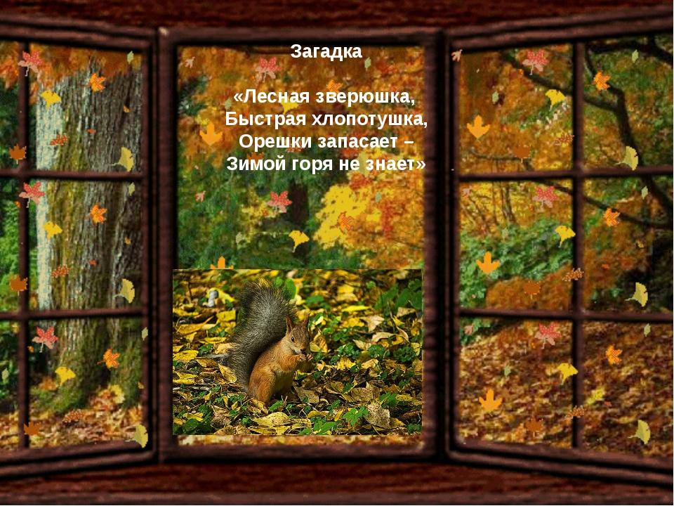 Загадка «Лесная зверюшка, Быстрая хлопотушка, Орешки запасает – Зимой горя не...