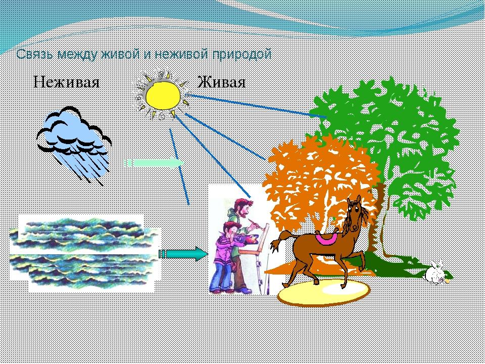 Рисунок показывающий связи между живой и неживой природой
