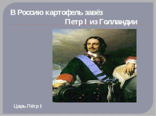 В Россию картофель завёз                              Петр I из Голландии Ца
