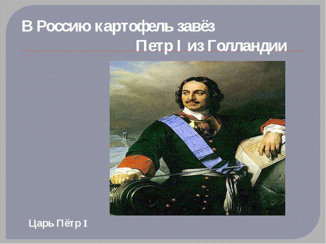 В Россию картофель завёз                              Петр I из Голландии Ца...