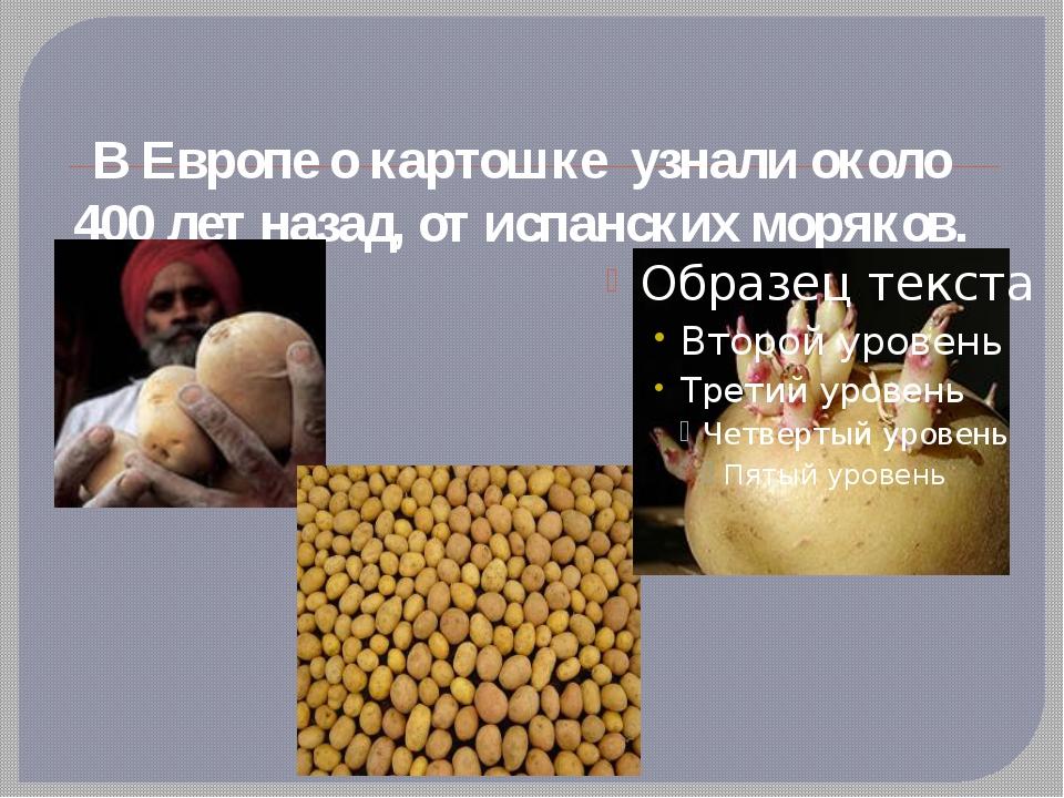 В Европе о картошке  узнали около 400 лет назад, от испанских моряков.