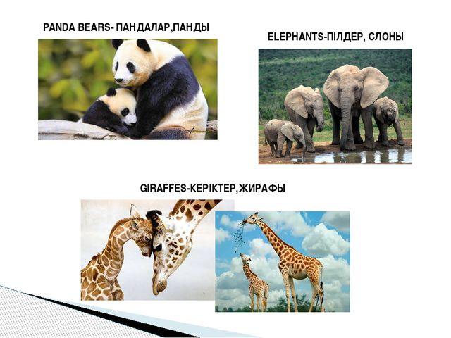 PANDA BEARS- ПАНДАЛАР,ПАНДЫ ELEPHANTS-ПІЛДЕР, СЛОНЫ GIRAFFES-КЕРІКТЕР,ЖИРАФЫ