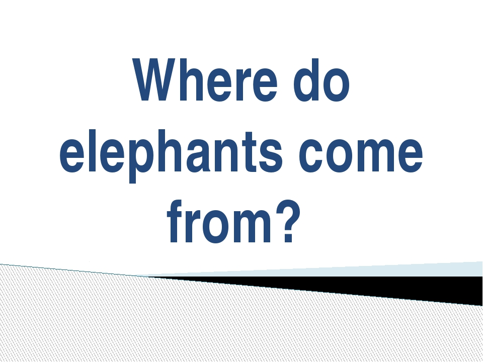Where do elephants come from?
