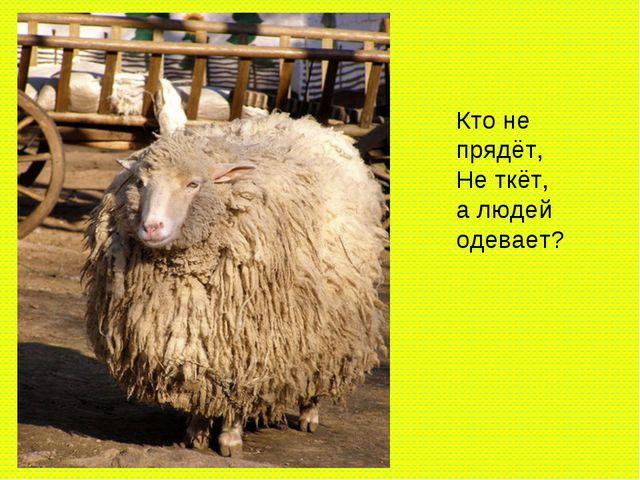 Кто не прядёт, Не ткёт, а людей одевает?