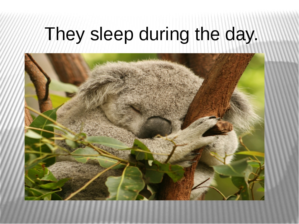 They sleep during the day.