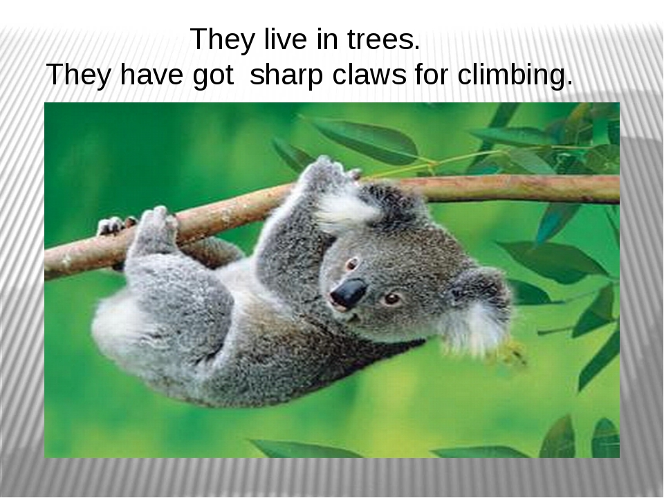 They live in trees. They have got sharp claws for climbing.
