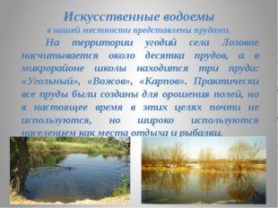 Искусственные водоемы в нашей местности представлены прудами. На территории у