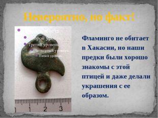 Невероятно, но факт! Фламинго не обитает в Хакасии, но наши предки были хорош