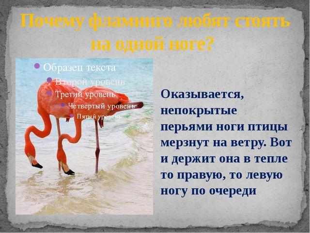 Почему фламинго любят стоять на одной ноге? Оказывается, непокрытые перьями н...