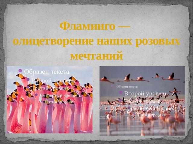 Фламинго — олицетворение наших розовых мечтаний