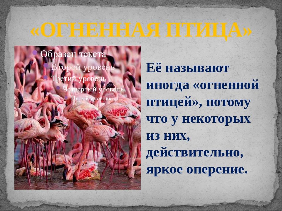 «ОГНЕННАЯ ПТИЦА» Её называют иногда «огненной птицей», потому что у некоторых...