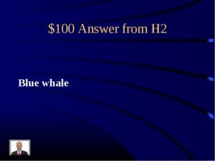 $100 Answer from H2 Blue whale