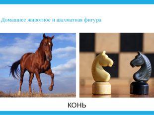 3. Домашнее животное и шахматная фигура КОНЬ