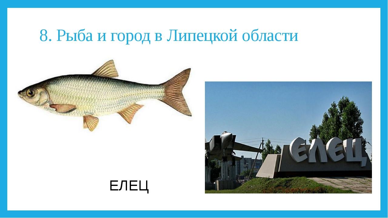 8. Рыба и город в Липецкой области ЕЛЕЦ