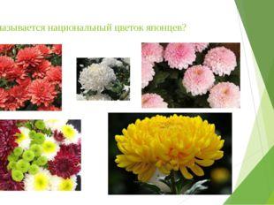 Как называется национальный цветок японцев?