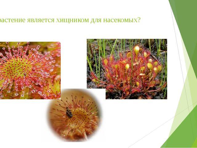Это растение является хищником для насекомых?