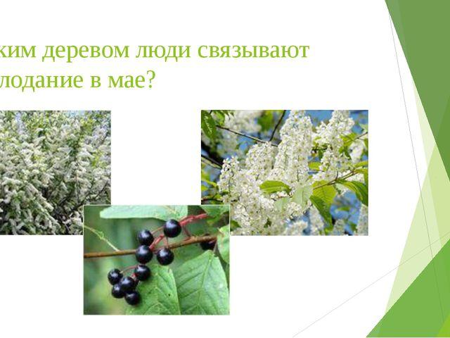 С каким деревом люди связывают похолодание в мае?