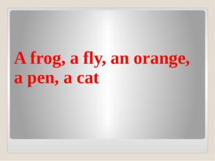A frog, a fly, an orange, a pen, a cat