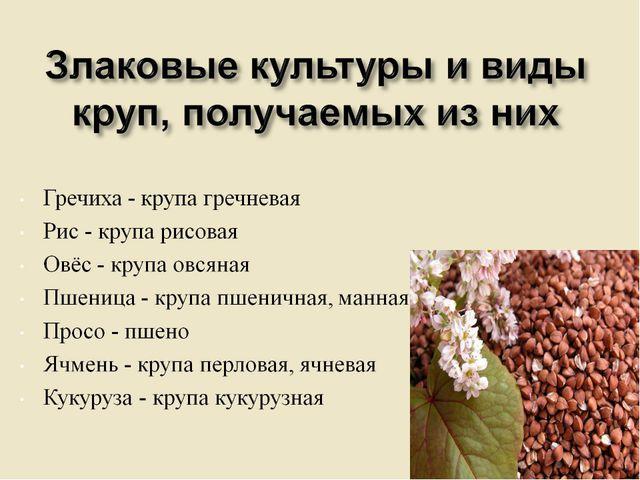 Злаковые культуры и виды круп, получаемых из них