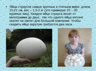 Яйца страусов самые крупные в птичьем мире: длина 15-21 см, вес – 1,5-2 кг (э