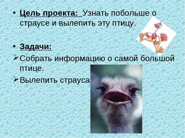 Цель проекта: Узнать побольше о страусе и вылепить эту птицу. Задачи: Собрать...