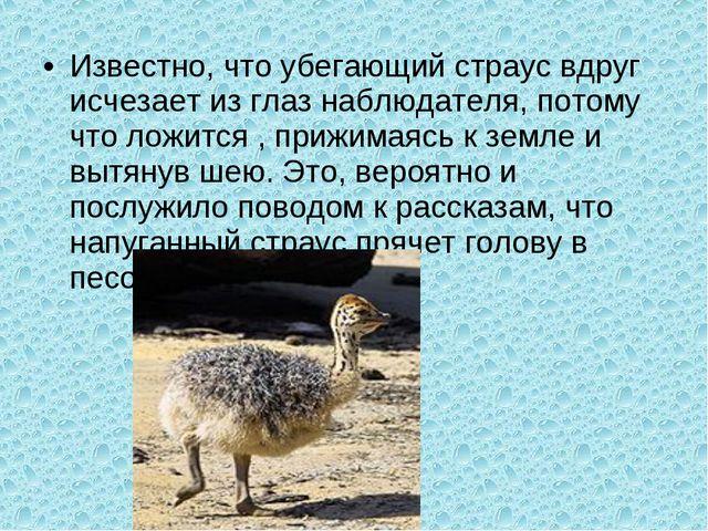 Известно, что убегающий страус вдруг исчезает из глаз наблюдателя, потому что...