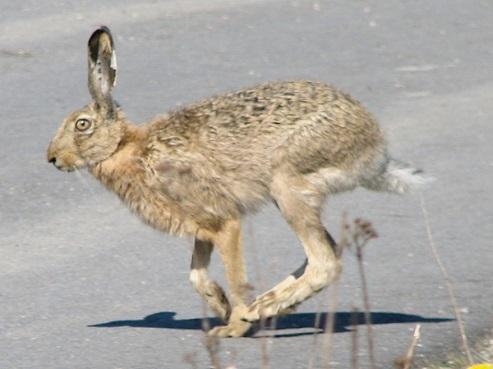 Заяц, кролики. Картинки, фото, видео