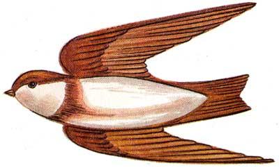 Школьный атлас-определитель птиц