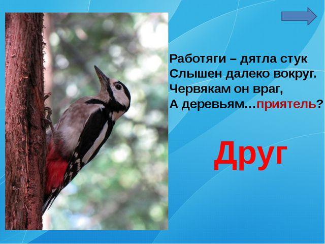 Работяги – дятла стук Слышен далеко вокруг. Червякам он враг, А деревьям…прия...