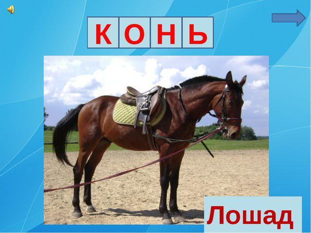 К О Н Ь Лошадь