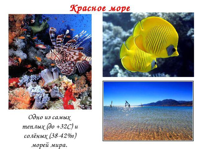 Красное море Одно из самых теплых (до +32С) и солёных (38-42‰) морей мира.