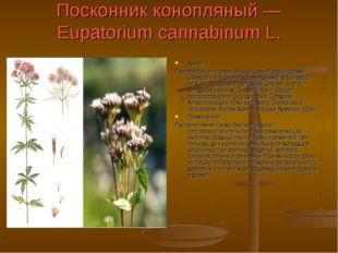 Посконник конопляный — Eupatorium cannabinum L. Ареал Распространен в европей