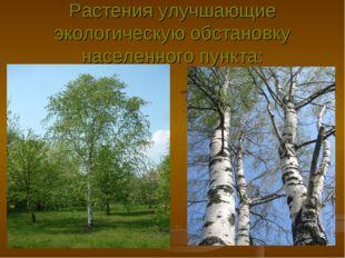 Растения улучшающие экологическую обстановку населенного пункта: