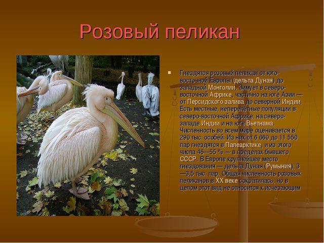 Розовый пеликан Гнездятся розовый пеликан от юго-восточной Европы (дельта Дун...