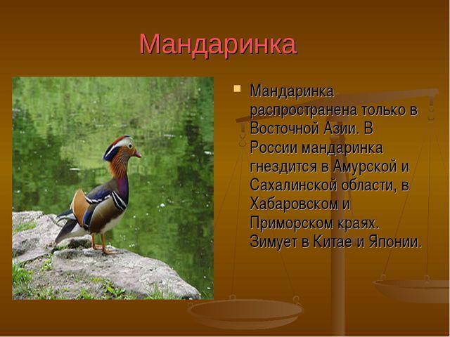 Мандаринка Мандаринка распространена только в Восточной Азии. В России манда...