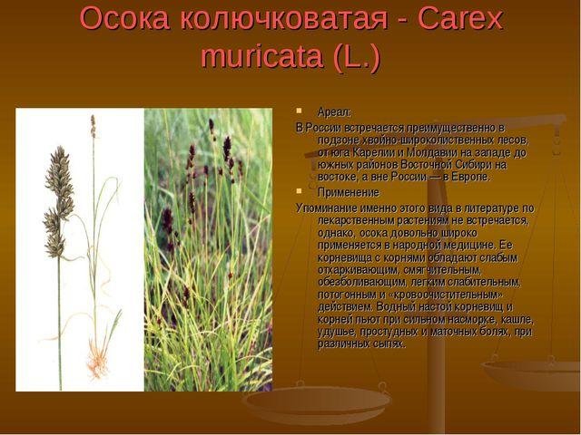 Осока колючковатая - Carex muricata (L.) Ареал: В России встречается преимуще...