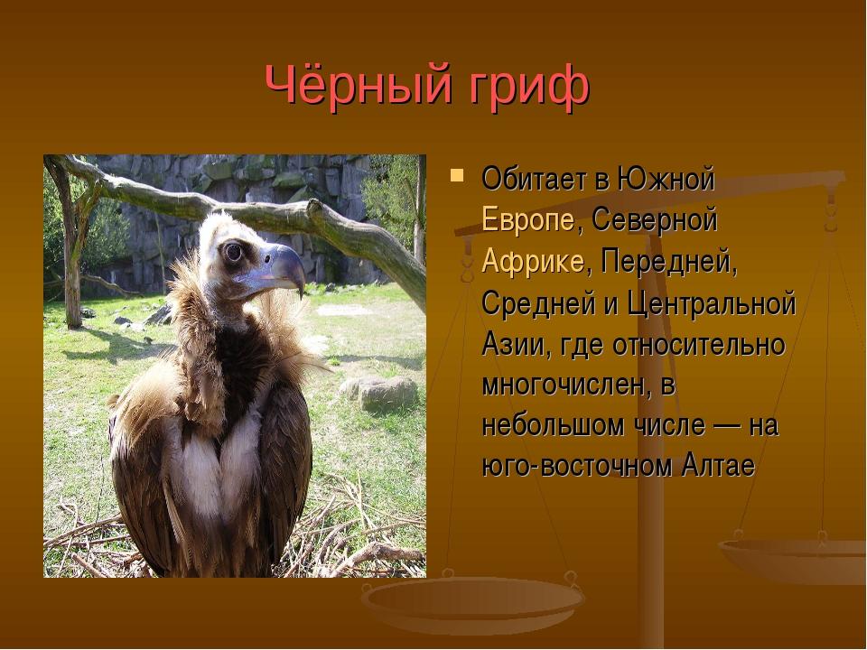 Чёрный гриф Обитает в Южной Европе, Северной Африке, Передней, Средней и Цент...