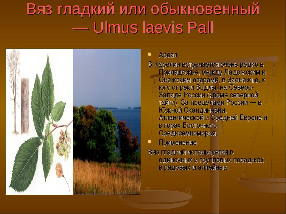 Вяз гладкий или обыкновенный — Ulmus laevis Pall Ареал В Карелии встречается...